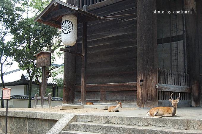 鹿-鹿ガイド、こちらは東大寺南大門です