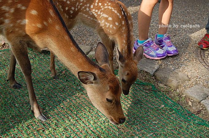 鹿‐おじぎを練習する鹿の親子