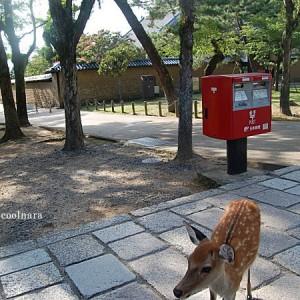 鹿-鹿ガイド、赤いポスト