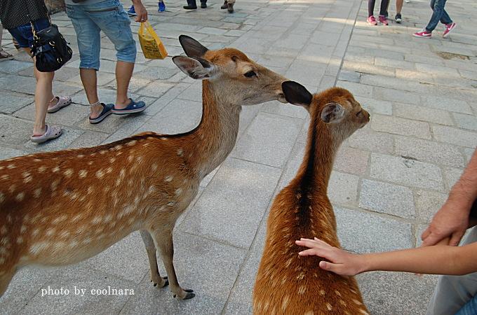 鹿にさわる時は気をつけて