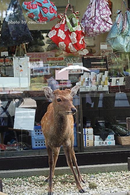 鹿-私はショップの看板娘