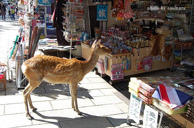 鹿-ショップへおじゃま