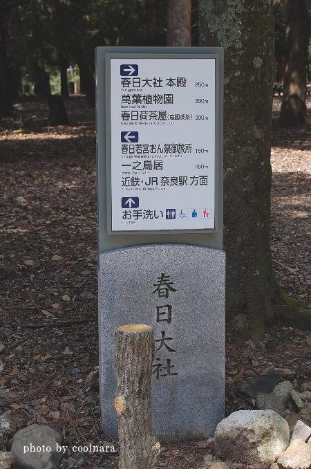 春日大社参道飛火野前
