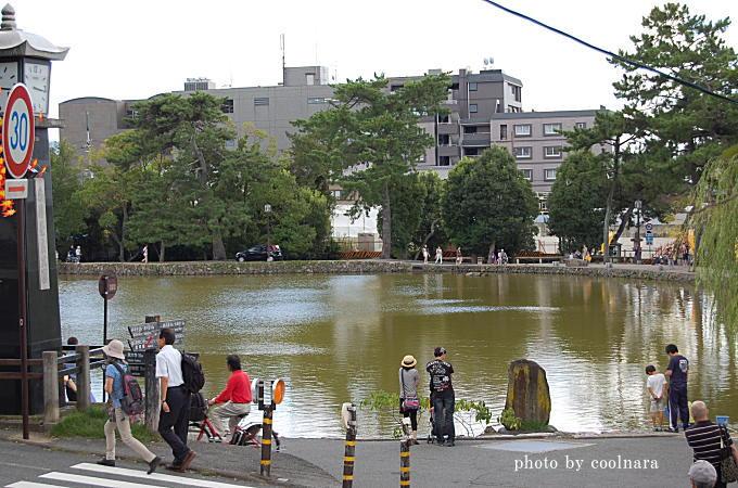 sarusawa-pond-1