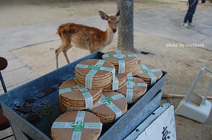 鹿-鹿せんべい美味しそう~!