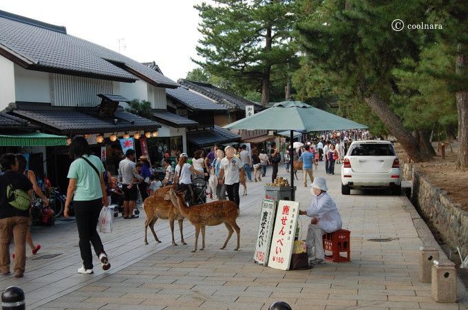 東大寺参道の鹿せんべい売り場
