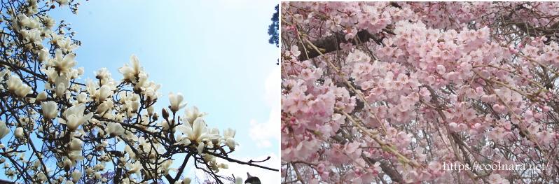 氷室神社(ひむろじんじゃ)