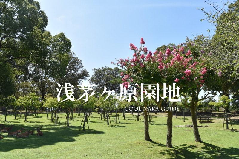 浅茅ケ原園地(奈良公園)