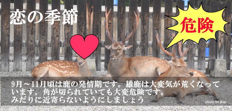 秋の奈良の鹿